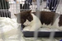 Super Cat Show 2012 (23a)