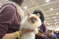 Super Cat Show 2012 (35)