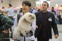 Super Cat Show 2012 (18)