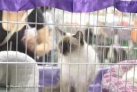 Super Cat Show 2012 (28)