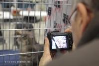 Super Cat Show 2012 (15)