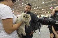 Super Cat Show 2012 (31)