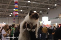 Super Cat Show 2012 (32)