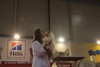 Super Cat Show 2012 (56)