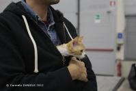 Super Cat Show 2012 (03)