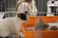 Super Cat Show 2012 (24)