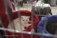Super Cat Show 2012 (11)