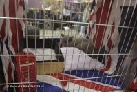 Super Cat Show 2012 (13)