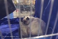 Super Cat Show 2012 (16)
