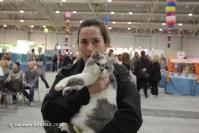 Super Cat Show 2012 (50)