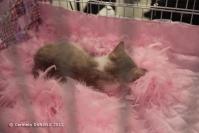 Super Cat Show 2012 (25)