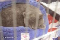 Super Cat Show 2012 (10)