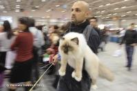 Super Cat Show 2012 (27)