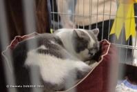 Super Cat Show 2012 (26)