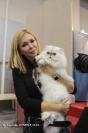 Super Cat Show 2012 (36)