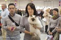 Super Cat Show 2012 (01)