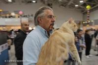 Super Cat Show 2012 (42)