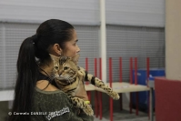 Super Cat Show 2012 (53)