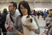 Super Cat Show 2012 (02)