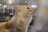 Super Cat Show 2012 (5)