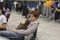 Super Cat Show 2012 (9)