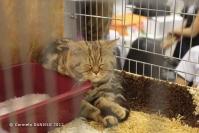 Super Cat Show 2012 (8)