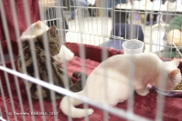 Super Cat Show 2012 (7)
