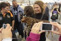 Super Cat Show 2012 (6)