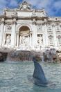 20121117 - Squalo a Fontana di Trevi