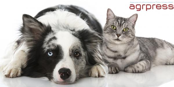 Cani e gatti non saranno più cibo a Taiwan